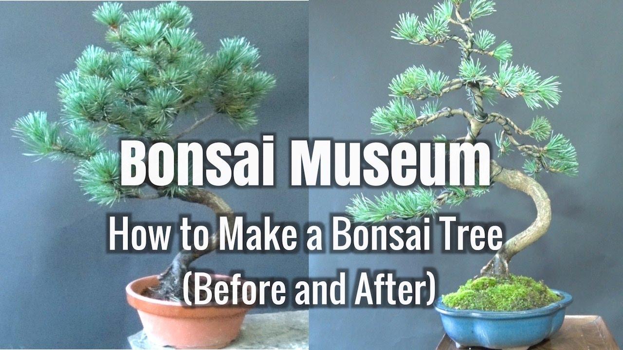 Bonsai Museum: How to Make a Bonsai Tree
