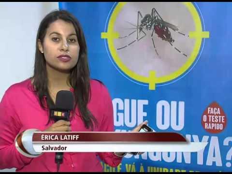 Na Bahia, o combate ao mosquito transmissor da dengue e da febre chikungunya ganha reforço