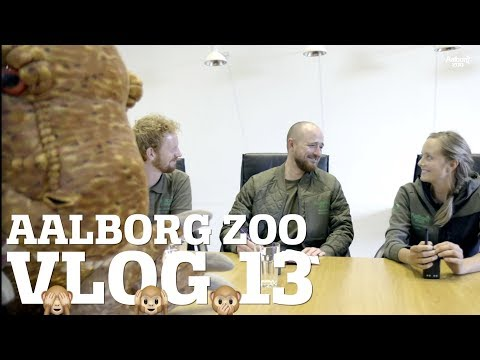 FREMTIDEN FOR ZOO-VLOGS | HAR EN HAN-ELEFANT BRYSTVORTER?