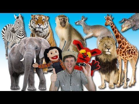 What Do You See? Song | Wild Animals | Learn English Kids