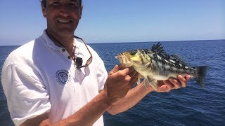 Catalina Island Live Bait Fishing Aboard The Tailchaser
