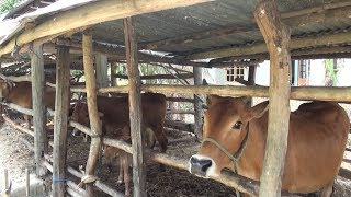 Tin Tức 24h: Người chăn nuôi có thêm niềm vui đầu năm mới