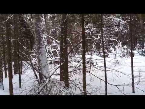 Поход в другой лес