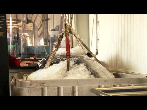 Download mercury madness a study of methylmercury in fish for How does mercury get into fish