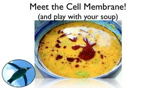Meet... The Cell Membrane!