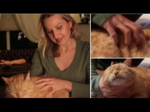 (◣ .◢) CAT MASSAGE ASMR: Binaural whispering and soft speaking for RELAXATION and sleep