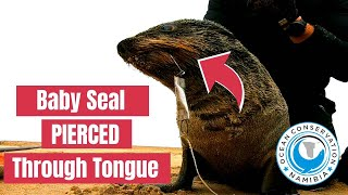 Baby Seal RELAXES After Rescued From Hook