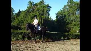 How To Keep Your Lower Legs Anchored so Your Horse Stays Connected in the Transitions #2