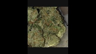 Kryptonite Strain Review