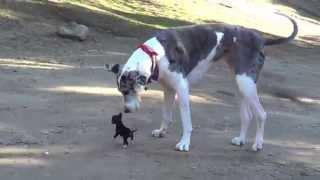 Little Puppy Meets Big Dog