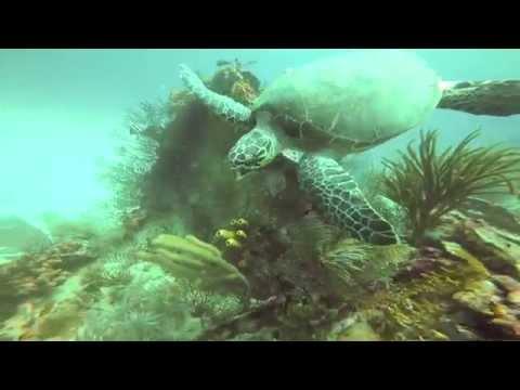 Scuba Diving GoPro, Turtle Power, Barbados