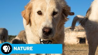 NATURE | Animals with Cameras, Episode 3: Official Trailer | PBS