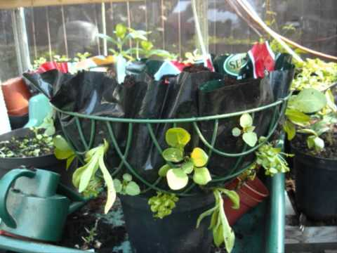 How To Plant A Hanging Basket Youtube