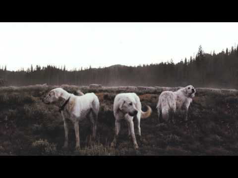 Foxing - Inuit