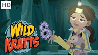 Wild Kratts 🌿🐊 Explore the Everglades! | Kids Videos