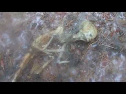 Гуманоид, мёртвый инопланетянин