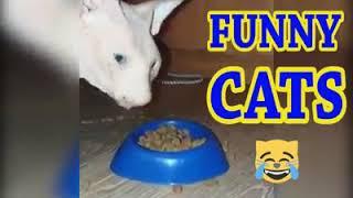 قطط مضحكه funny cats 2019