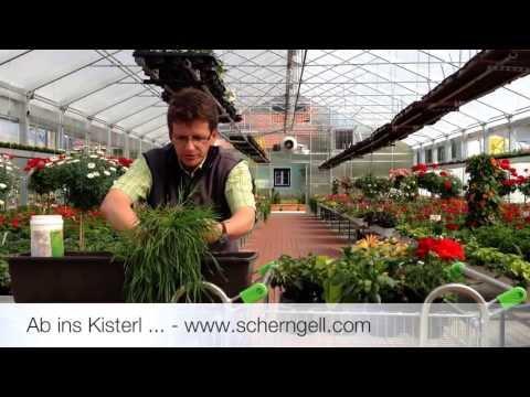Scherngell Gärtnereitipp: Bepflanzen Von Balkonkästen