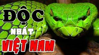 1 Giọt Nọc Độc Giết Chết 1000 Người Và Những Loài Rắn Nguy Hiểm Nhất Việt Nam