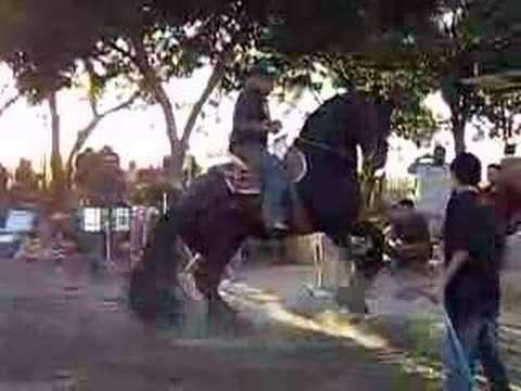 caballo bailador el frizon