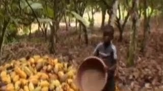 The Dark Side of Chocolate - Child Slavery