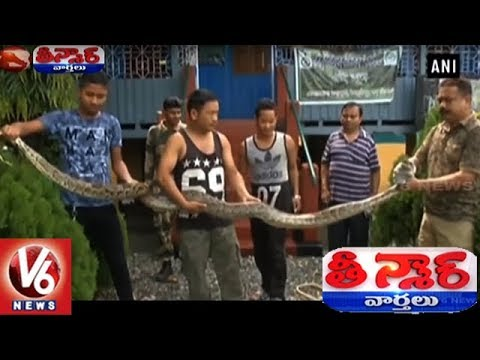 Forest Ranger From WB Poses With Python, Has A Narrow Escape From Death | Teenmaar News