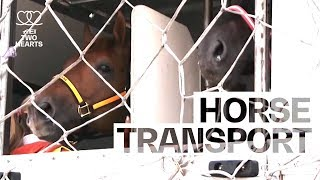 How to ship horses around the world | Health & Fitness