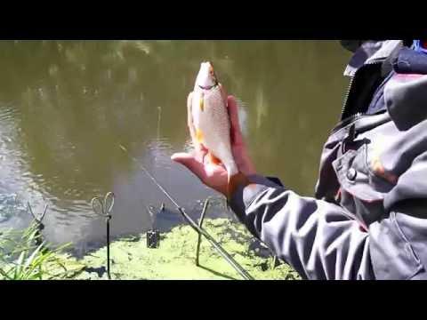 ловля карпа и сазана весной в реке видео