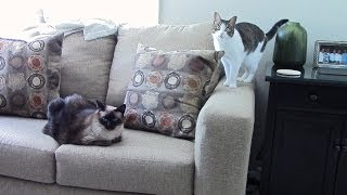 Spray to stop cats scratching sofa