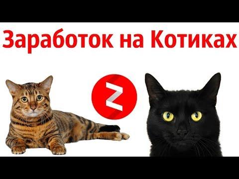 Даже Коты зарабатывают на Яндекс Дзен