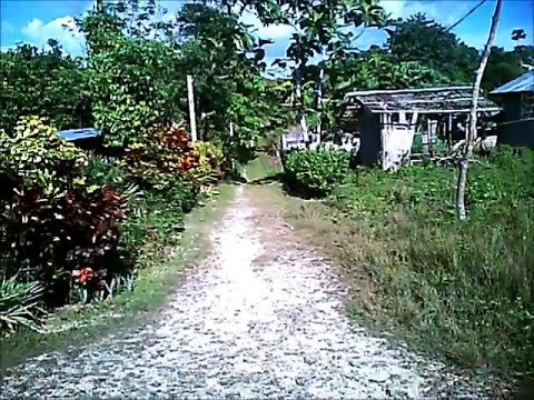 My Bohol Neighborhood - Philippines