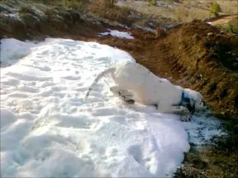 İlk kez kar gören köpek