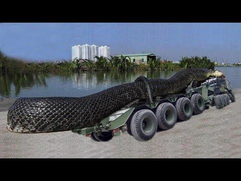 ఇప్పటివరకు కంటపడిన  అత్యంత పెద్ద పాము|5 Biggest Snakes Ever Found By Humans On earth In Telugu