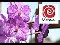 Медитация - Цветок здоровья