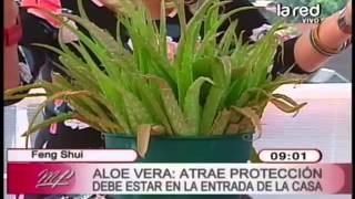 Feng Shui de las plantas: Aloe Vera atrae protección, suerte y properidad