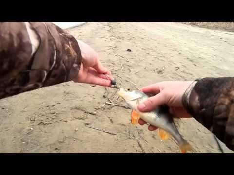 как ловить хищника на донце