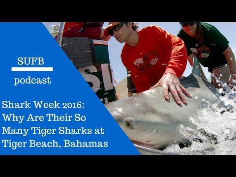 Shark Week 2016: Tiger Beach Review