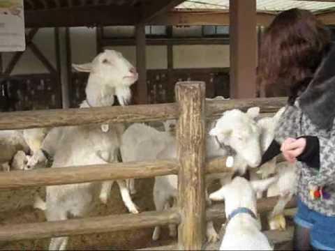 【動物園】エサとやぎさんとワタシ