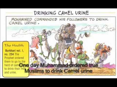 Drink camel urine not cow urine muslim islamic culture for Cocktail urine