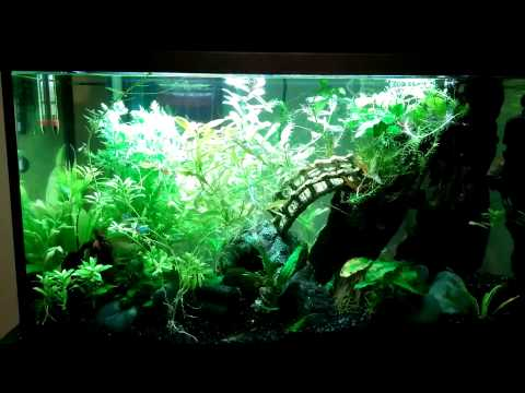 29 gal freshwater fishtank before teardown for new design