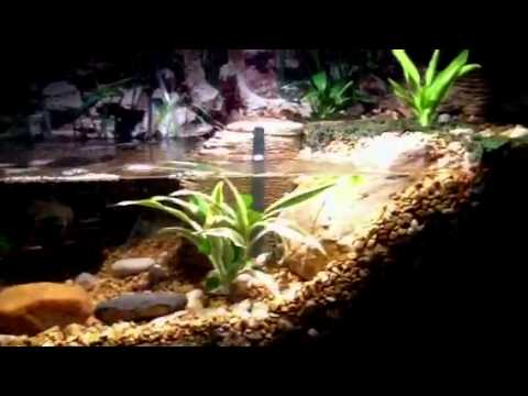 Bad ass turtle tank - even better - YouTube
