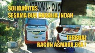 Solidaritas Sesama Bus Rosalia Indah, Terbuai Racun Asmara EKA !