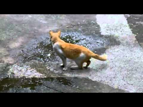 Gatos - Gato impasible ante ataque de pájaros en la calle