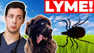 My Puppy Got Lyme Disease | To Treat or Not To Treat | Wednesday Checkup