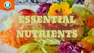 6 Essential Nutrients | Why Your Body Needs Them
