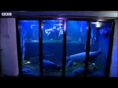 Bbc news nottingham fish tank man dreams of big aquarium for How to build a large fish tank