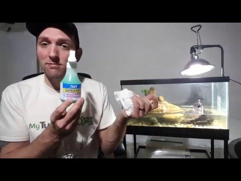 How To Safely Clean Your Tank or Turtle Tank With Safe And Easy