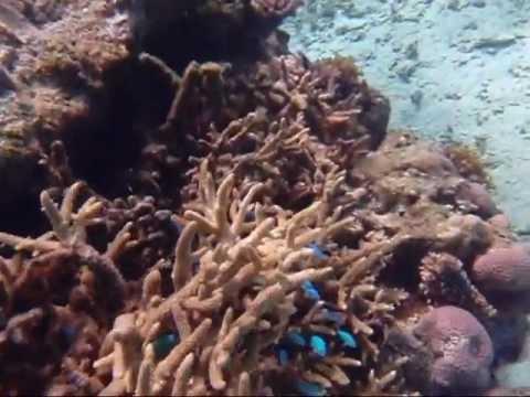 Fiji Snorkeling 08-Royal Davui