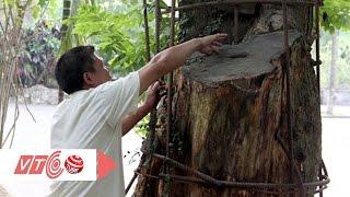 Ly kỳ câu chuyện 'cây sưa 150 tỷ' | VTC