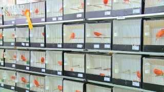 Gouden Ring Cage Bird Show 2013